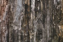 Старая серая кора дерева Темная грязная коричневая кора дерева Деревянная серая текстура, предпосылка Поверхность Grunge деревянн стоковые фото