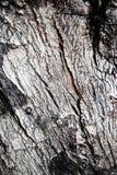 Старая серая расшива дерева текстуры Стоковая Фотография RF