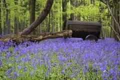 Старая сельско-хозяйственная техника в живом ландшафте леса весны bluebell Стоковые Изображения RF
