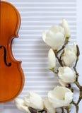 Старая скрипка и цвести brances магнолии на белой бумаге примечания r стоковые изображения rf