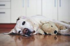 Старая собака в домашней кухне стоковое фото