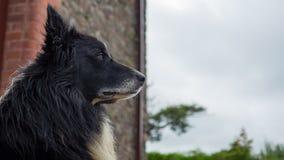 Старая собака с унылыми глазами Стоковые Фото