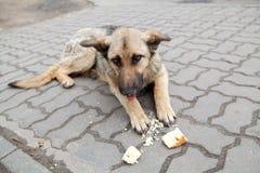 старая собаки бездомная Стоковые Фотографии RF