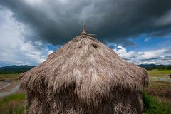 Старая солома в рисовых полях, пасмурных приходит Зеленые поле и trop стоковые фото