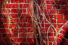 Старая стена блоков гранита Стоковое Изображение
