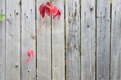 Старая стена деревянных планок Стоковые Фото