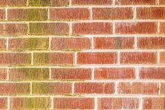 Старая стена от виска Стоковые Фото