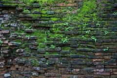 Старая стена с предпосылкой MOS Стоковые Фото