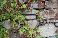 Старая стена Стоковая Фотография RF