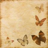 Старая текстура бумаги бабочки grunge Стоковые Изображения RF