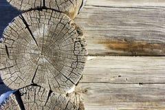 старая текстура деревянная Профиль дерева Стоковые Изображения