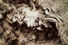 старая текстура деревянная Стоковое Изображение