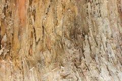 Старая текстура дерева Стоковые Фотографии RF