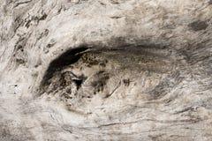 Старая текстура конспекта ствола дерева Стоковое фото RF