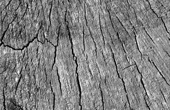 Старая текстура отрезка дерева в черно-белом Стоковые Фотографии RF