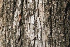 Старая текстура расшивы Стоковые Фото