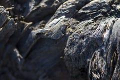 Старая текстура Grunge Driftwood Стоковое Изображение RF