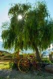 Старая тележка под деревом стоковая фотография