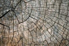 Старая треснутая предпосылка текстуры пня дерева Выдержанная деревянная текстура с поперечным сечением отрезанного журнала с конц стоковые изображения rf