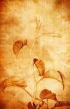 старая фасонируемая предпосылкой флористическая Стоковые Изображения
