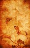старая фасонируемая предпосылкой флористическая Стоковая Фотография