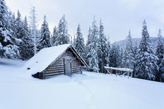 Старая хата на лесе Стоковая Фотография