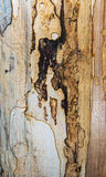 Старая mouldering текстура древесины дуба Стоковое Изображение