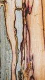 Старая mouldering текстура древесины дуба Стоковое Изображение RF
