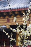 стародедовская белизна театра цветков стоковые изображения