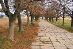 стародедовская главная дорога крепости стоковые фотографии rf