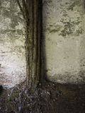 стародедовская стена вала Стоковые Изображения
