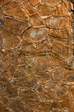 стародедовская стена утеса Стоковое Фото