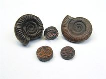 Стародедовские монетка и ископаемый Стоковые Изображения