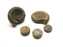 Стародедовские монетка и ископаемый Стоковое Изображение