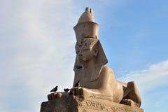 стародедовский египетский сфинкс Стоковая Фотография