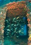 стародедовский искусственний риф моряка стоковое изображение rf