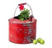 стародедовский красный цвет газа цветка контейнера Стоковое Изображение RF