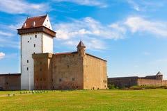 стародедовское narva крепости эстонии стоковые изображения