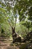 стародедовское wat tre angkor стоковые фотографии rf