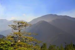 Старое большое дерево под голубым небом Стоковая Фотография RF