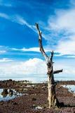 Старое большое сухое дерево с голубым небом в предпосылке Стоковые Изображения RF