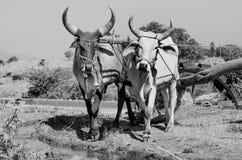 Старое вод-колесо в Гуджарате, Индии Стоковые Фото