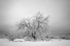 Старое дерево в зиме Стоковые Изображения RF