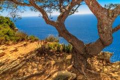 Старое дерево и сценарный взгляд океана Стоковая Фотография RF