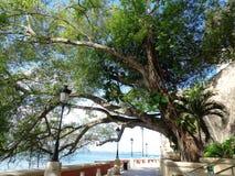 Старое дерево на парке стоковые изображения