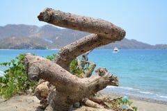 Старое дерево на пляже стоковое изображение