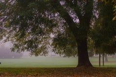 Старое дерево парка в Милане стоковые изображения