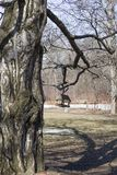 Старое дерево с красивой текстурой коры и веся фидером птицы стоковое фото rf