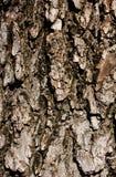Старое деревянное деревенское шелушение краски предпосылки Стоковое Изображение RF