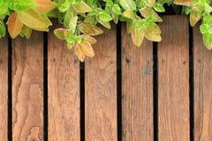 Старое деревянное с зелеными листьями Стоковая Фотография